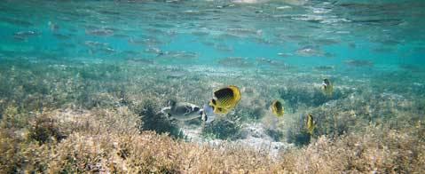 Les eaux polynésiennes