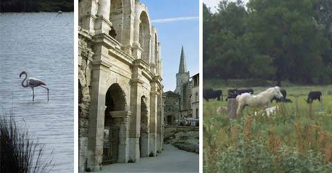 Flamand / arènes Arles / manade