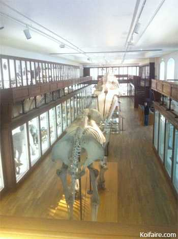 Museum d\'histoire naturelle de Nantes